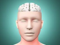 Brain man. A human Brain. Anatomical visualization. 3D rendered illustration Royalty Free Stock Image