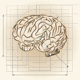 Brain map Royalty Free Stock Photo