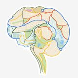 Brain Map. An illustration of a human brain made up from a map. Vector illustration Royalty Free Stock Image