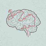 Brain maze with correct path vector illustration