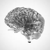 A brain Stock Photo