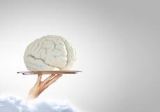 Brain on metal tray Royalty Free Stock Image