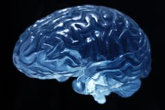 Brain model Royalty Free Stock Images
