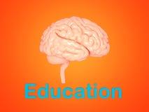 Brain Model - 3D framförd bild royaltyfri illustrationer