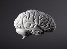 Brain model side view. A human brain on a dark light gradient background Royalty Free Stock Photos