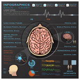 Brain And Nervous System Medical Infographic Infochart. Design Template Stock Photos