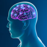 Brain neurons synapse functions Stock Photos