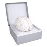 Brain in open gift box Royalty Free Stock Photos