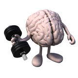 Brain organ with arms and legs weight training Stock Images