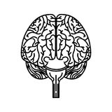 Brain organ human icon Royalty Free Stock Images