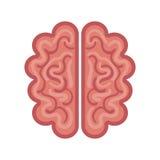 Brain organ human isolated icon Stock Image