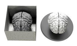 Brain in and out of a box Stock Images