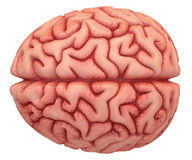 Brain Over White Royalty Free Stock Photography