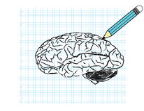 Brain. Paper with a pencil drawing of the brain Stock Photography