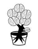 Brain. In pot on white background Royalty Free Stock Photos