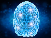 Brain power concept Royalty Free Stock Image