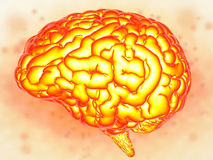 Brain power concept. With 3d rendering shiny human brain Stock Images