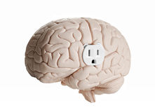 Brain power. Brain model with an electrical outlet against a white background Stock Images