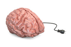 Brain and power plug, thinking concept. 3D illustration. Brain and power plug, thinking concept Royalty Free Stock Photography