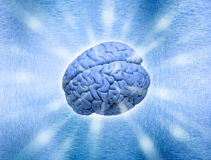 Brain Power Thought. A human brain on a modern metallic background Stock Photos