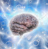 Brain Radiates. Power and energy Stock Photography