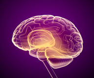 Brain x-ray scan , Medically accurate Stock Photos