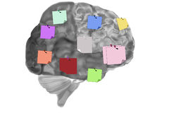 Brain With Reminder Notes Stock Photo
