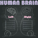 Brain Right and Left. Left and right brain image was painted with chalk on a blackboard in vector format royalty free illustration