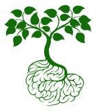 Brain roots tree Stock Image