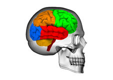 Brain Scan. 3D render image representing a brain scan royalty free illustration
