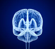Brain scan, X-ray Royalty Free Stock Images