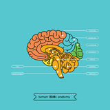Brain section 1. Schematic illustration of human cerebrum. Made in , easy recolor royalty free illustration