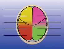 Brain. The sections of human brain Stock Photo