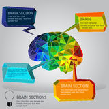 Brain sections Royalty Free Stock Images
