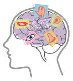 Brain 5 senses mind disorder Stock Photography
