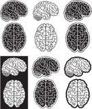 Brain set. Set of black and white human brain silhouettes Stock Photo