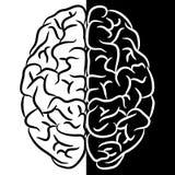 Brain shape Royalty Free Stock Image