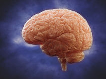Brain side view Stock Photos