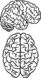 Brain silhouette Royalty Free Stock Image