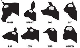 Brain Sizes animal illustration libre de droits