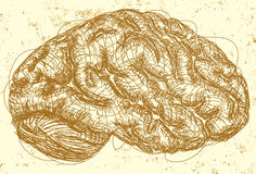 Brain sketch Stock Images