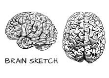 Brain sketch. VECTOR colored hand drawn human brain. Line work, pink. Front and side view. Black. Stock Photo