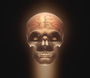Brain Skull Royalty Free Stock Photos