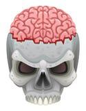 Brain in skull Stock Photo