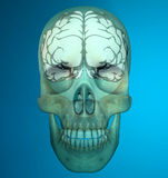 Brain skull x-ray head anatomy Royalty Free Stock Photos