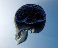 Brain skull x-ray head anatomy Royalty Free Stock Photography