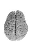 Brain Specimen Stock Photos