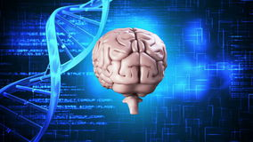 Brain spinning on dna background stock footage