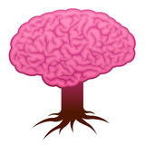 Brain with stem and roots Stock Image