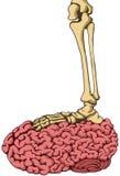 Brain Step di scheletro, colore Immagine Stock
